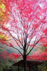 霧雨の紅葉つづき - ぽとすのくずかごⅡ