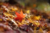落ち葉の詩(うた) - 風の彩りー3