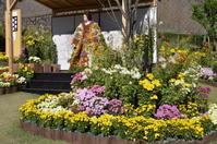 2020-11-09菊祭り - 思い立ったが吉日