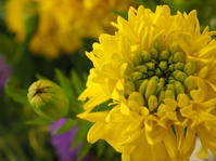 マリーゴールドの花束 - グリママの花日記