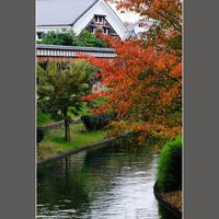 今年の紅葉 - HIGEMASA's Moody Photo