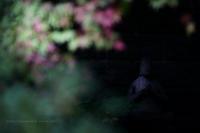長野市昌禅寺さんにて - 野沢温泉とその周辺いろいろ2