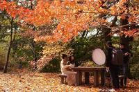 シアトルの森撮影シーン - kisaragi