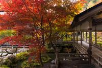 2020紅葉きらめく京都染まりゆく常照皇寺 - 花景色-K.W.C. PhotoBlog