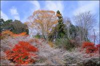 四季桜 - 薫の時の記憶