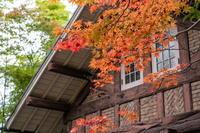 「ツワブキの咲く庭-アサヒビール大山崎山荘美術館庭園-」 - ほぼ京都人の密やかな眺め Excite Blog版