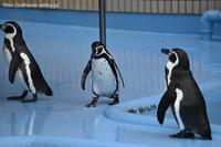 2020年10月王子動物園2その2 - ハープの徒然草