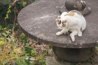 帰ってきた母三毛猫 - Omoブログ