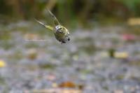 飛翔 - Olive Drab