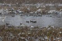 雪のMF&中央公園 - 今日の鳥さんⅡ