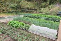 緑黄野菜 - 光さんの日常2