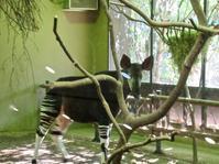 憧れのオカピ!──「よこはま動物園 ズーラシア」 - Welcome to Koro's Garden!