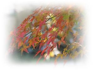 紅葉狩り日和 -