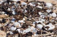 ブンブクまつり - Beachcomber's Logbook