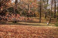 落ち葉の絨毯 - kisaragi