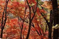 紅葉坂 - kisaragi