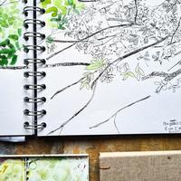 ドライグレンジのセイヨウトチノキ パート6:7がつ、8月、緑の終わり - ブルーベルの森-ブログ-英国のハンドメイド陶器と雑貨の通販