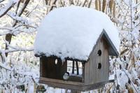 雪の日のハシブトガラさん~11月の旭川 - My favorite ~Diary 3~