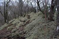 初冬の愛鷹山 - 蝶と蜻蛉の撮影日記