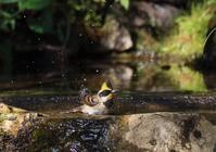 水浴、 - ぶらり探鳥