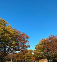 紅葉が美しい季節 - ~Have a lovely time~