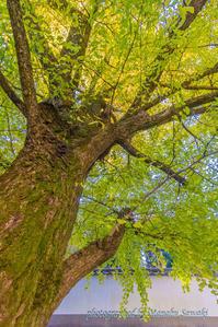 奥多摩御岳渓谷の紅葉 - デジカメ写真集