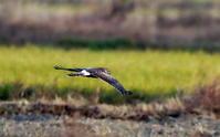 今日の探鳥で出会えた鳥たち - 私の鳥撮り散歩