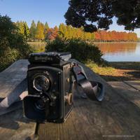 色付く木々 - 心のカメラ   more tomorrow than today ...