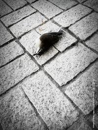 小鳥の死 - Illusion on the Borderline  II @へなちょこ魔術師
