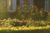 今日の旧古河庭園 - meの写真はザンス