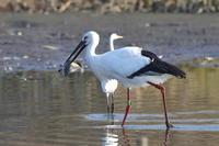 大きな魚を - 『彩の国ピンボケ野鳥写真館』