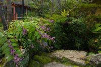 ホトトギス咲く三千院 - 花景色-K.W.C. PhotoBlog