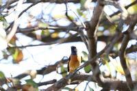 いろんなところで出会った鳥さんたち♪ - happy-cafe*vol.2