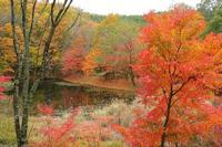 湿地燃ゆる秋 - 薫の時の記憶