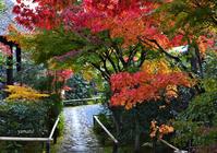 京都 光悦寺で紅葉を楽しむ - ぎゃらりー竹斎堂