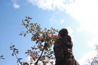 長野 りんご農家での一日 - お片付け☆totoのえる  - 茨城・つくば 整理収納アドバイザー