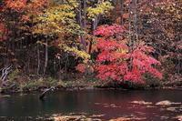 八幡平市松川渓谷五葉沼の紅葉  前半 - 日本あちこち撮り歩記