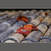 落ち葉 - HIGEMASA's Moody Photo