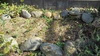 ペレニアル・フラックス植え付け - ウィズ(ゼロ)コロナのうちの庭の備忘録~Green's Garden~