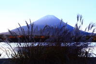 令和2年11月の富士(5)精進湖のススキと富士 - 富士への散歩道 ~撮影記~