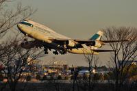 枯れ木の向こう - まずは広島空港より宜しくです。