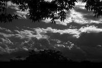 ある秋の一日、光と影20201103 - Yoshi-A の写真の楽しみ