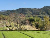 暖かい日はお墓参りをしよう - 島暮らしのケセラセラ