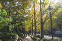 秋の山下公園 - AREKORE