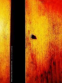 小さなネコハエトリ - Illusion on the Borderline  II @へなちょこ魔術師