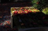 今年も紅葉狩りに出かけました - スポック艦長のPhoto Diary