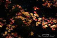 風のかけたるしがらみは~軽井沢雲場池 #3~ - 風の彩りー3