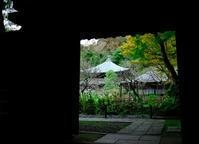 鎌倉「錦屏山瑞泉寺」 - ようこそ風の散歩へ