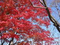 2020年の菊池渓谷&菊池、阿蘇スカイラインの紅葉は今が見ごろ!ビューポイント&穴場スポット紹介! - FLCパートナーズストア
