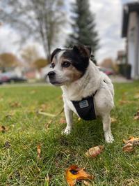 犬の認知症 - タイタスのいるところ      London Ontario